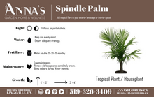 "Load image into Gallery viewer, 14"" Spindle Palm Tree"