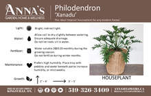 "Load image into Gallery viewer, 4"" Philodendron Xanadu"
