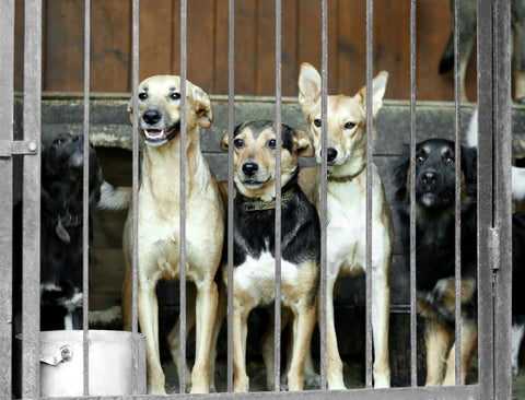 dogs-behind-bars
