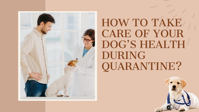 How to Take Care of your Dog's Health during Quarantine