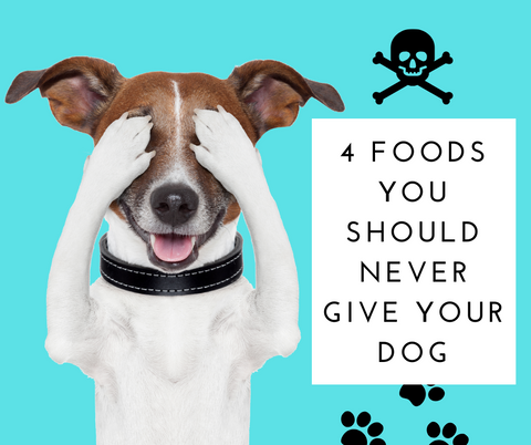 4 Foods You Should Never Give Your Dog