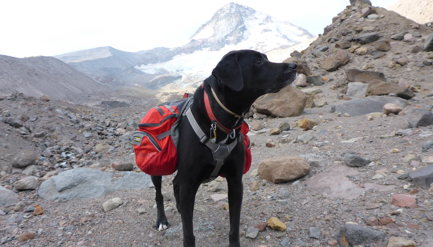 Ultralight backpacking with your dog