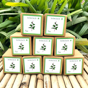 Sow and Grow Mini Grow Kits of Rama Tulsi/ Holy Basil: Set of 9