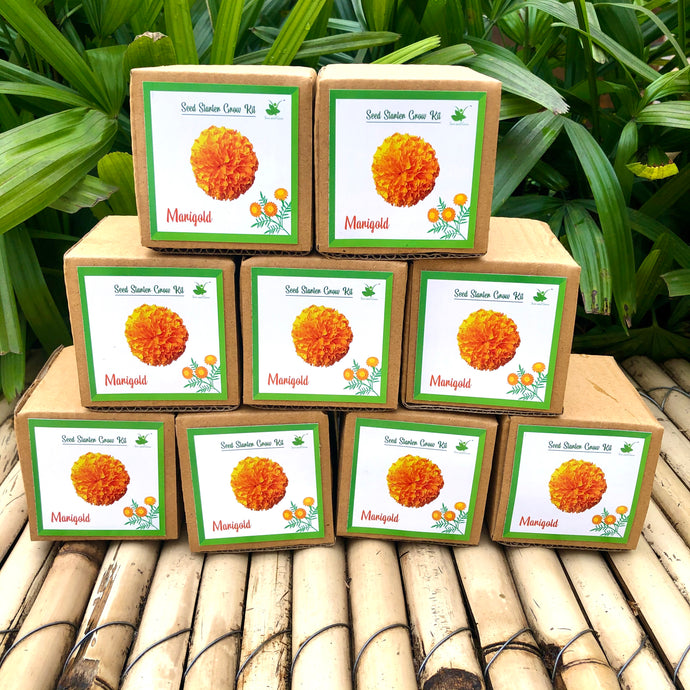 Sow and Grow Mini Grow Kits of Marigold Flowers: Set of 9