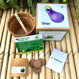 DIY Gardening 3 Vegetable Kits | Tomato + Brinjal + Chilli