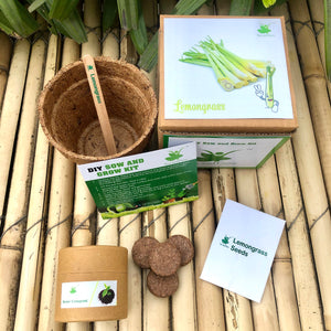 Sow and Grow DIY Gardening Kit of Lemongrass (Grow it Yourself Herb Kit)