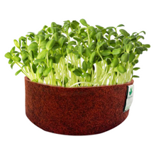 Load image into Gallery viewer, Sow and Grow Sunflower Microgreen Seeds- 200 Grams | Best Germination Rate | Grow Your Own Super Salad