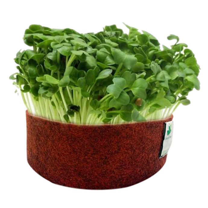 Sow and Grow White Radish Microgreen Seeds- 250 Grams | Best Germination Rate | Grow Your Own Super Salad