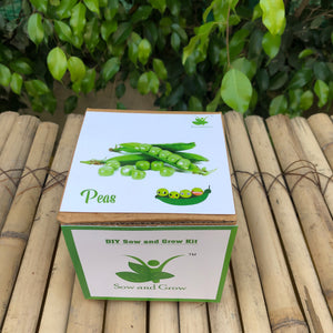 Sow and Grow DIY Gardening Kit of Peas /Matar (Grow it Yourself Vegetable Kit)