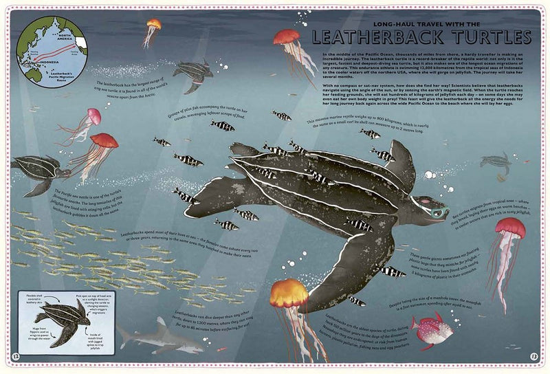Atlas Of Ocean Adventures - Lucy Letherland