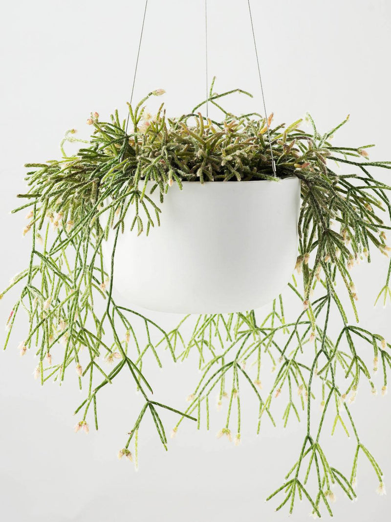 Hanging Pot Raw Earth Chalk White