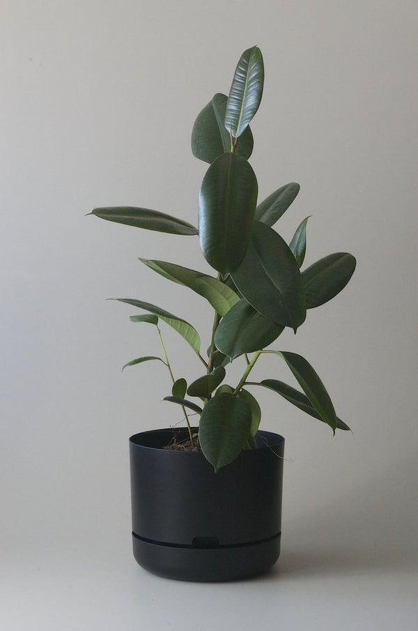 Self Watering Plant Pot, Recycled Black 300mm