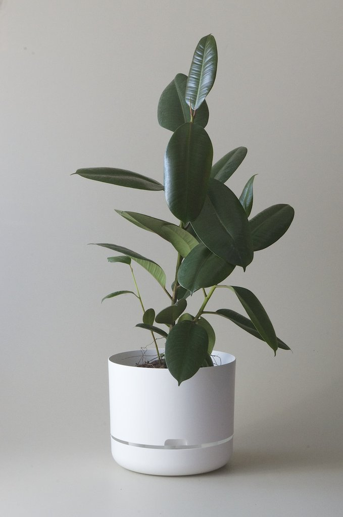 Self Watering Plant Pot, White 300mm