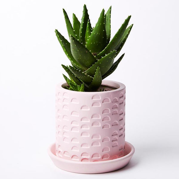 Jones & Co Semi Circle Tray Planter Pink