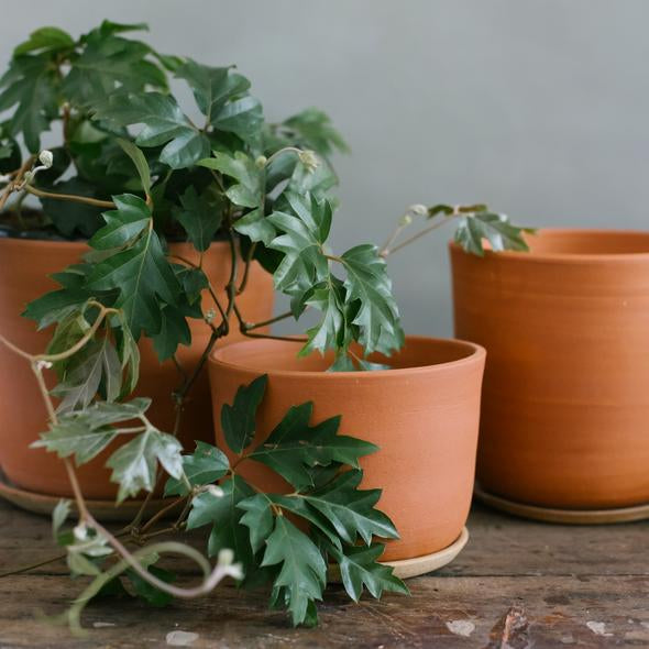 Leaf & Thread Extra Large Stoneware Planter + Saucer Terracotta