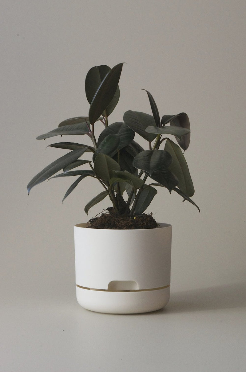 Mr Kitly Self Watering Plant Pot White Linen 170mm