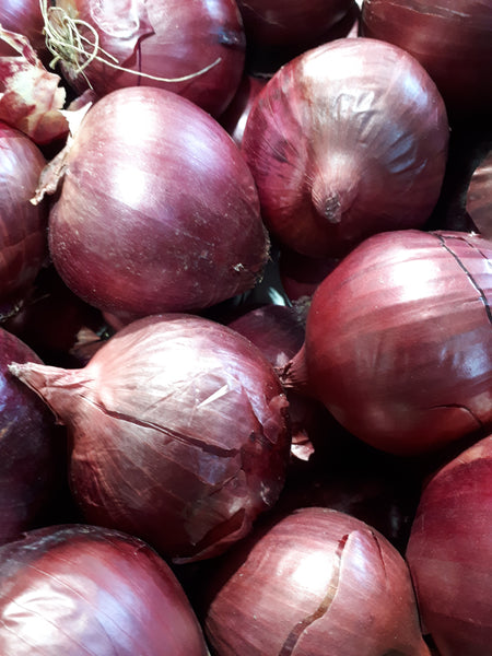 RED ONIONS BOX 10kg