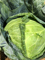 Cabbage Plain