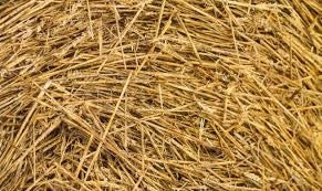 GA ANIMAL BEDDING STRAW 1KG