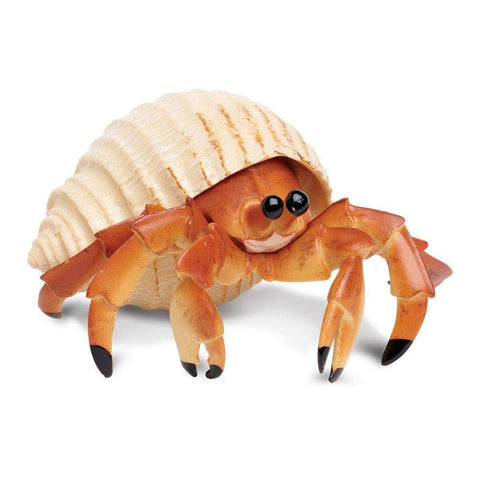 HERMIT CRAB LIVE MEDIUM