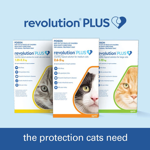REVOLUTION PLUS CAT MEDIUM 2.5-5KG 3PK