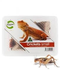 CRICKETS SMALL PISCES