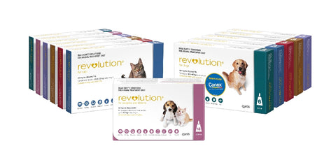 REVOLUTION DOG 2.6-5 KG PURPLE 6 PACK