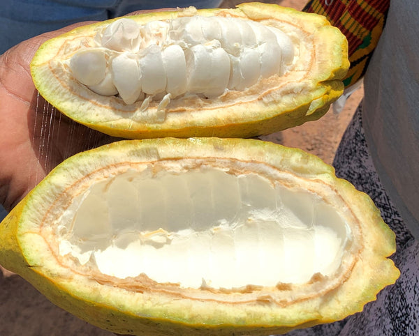 Large Volume - Natural Unrefined Cocoa Butter (Ghana)