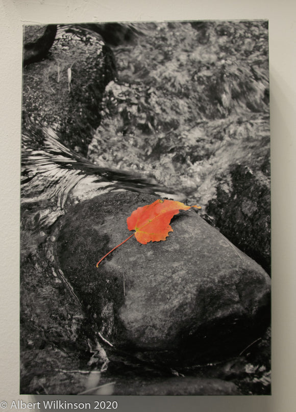 Enhanced Paper Gallery Wrap, Leaf on a Rock