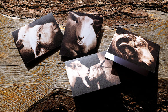 Farm Animal Greeting Card Set (4) - Blank Inside