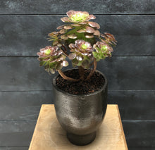Load image into Gallery viewer, Succulent in contemporary pot