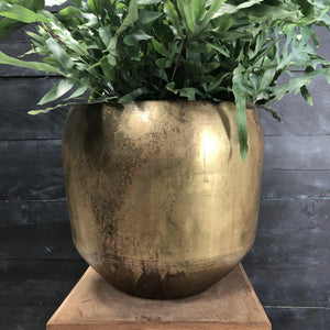 Aged brass planter plant