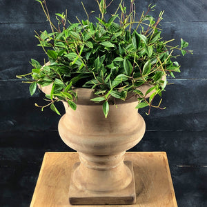 Kate aged terracotta urn with Peperomia top view