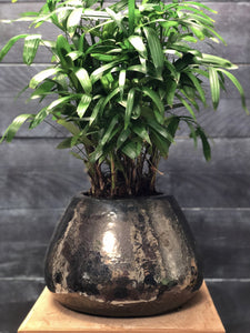 Metallic pear pot with Rhapis