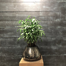 Load image into Gallery viewer, Metallic pear pot with Rhapis