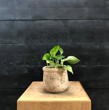 Load image into Gallery viewer, Textured Muse Pot with variegated trailing plant