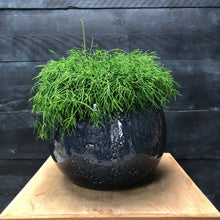 Load image into Gallery viewer, Sphere glazed planter with Rhipsalis