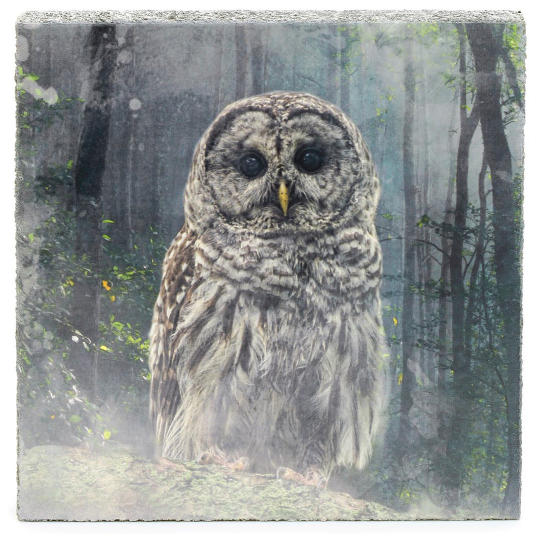 Large Lost & Found Art Block - Forest Owl