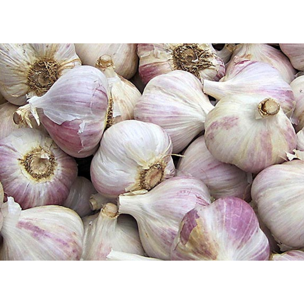 garlic-spanish-per-kg