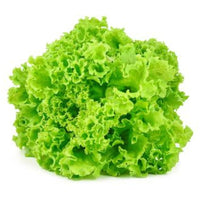 lettuce-green-coral-each
