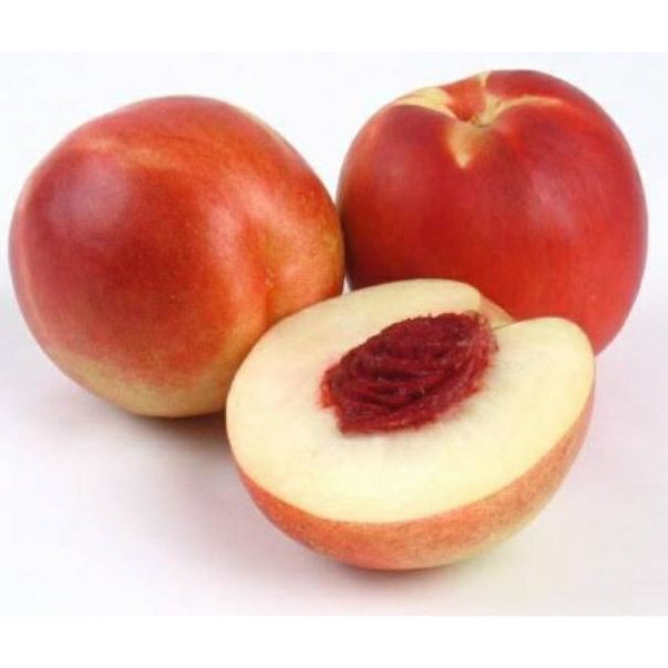 White Nectarine - Each