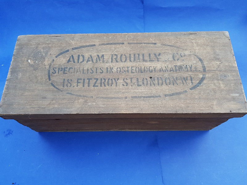 Antique Adam Rouilly real human medical skeleton in box for sale