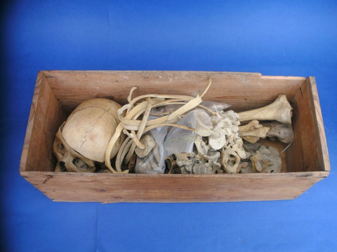 Antique medical real human half skeleton in box
