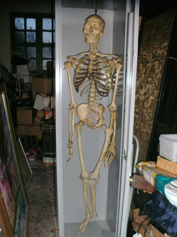 Vintage full articulated real human skeleton medical specimen.
