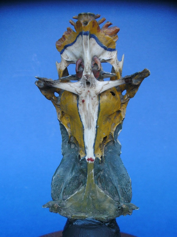 Antique Crucifix catfish painted skull