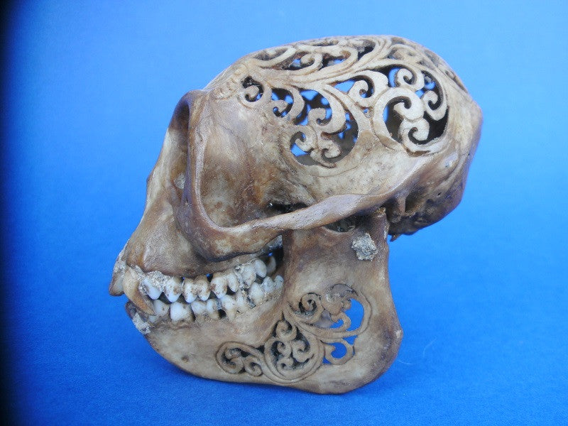 carved Indonesian monkey skull Batak