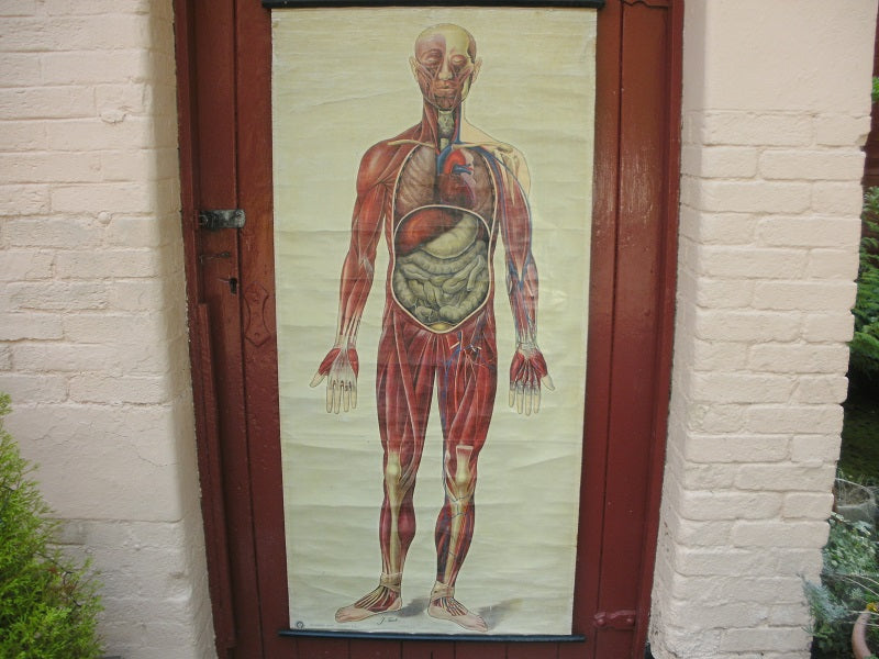 Vintage St John's ambulance medical poster, General Anatomy