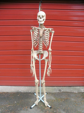 Adam Rouilly real human full medical skeleton excellent condition.