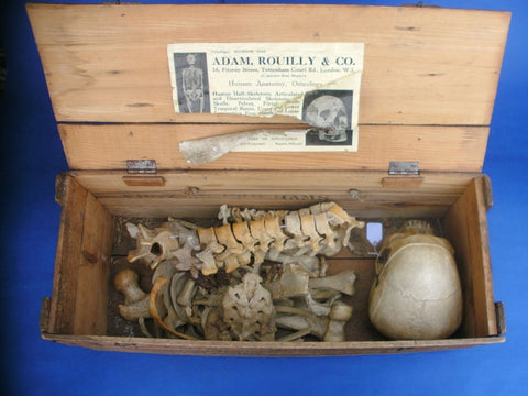 Antique Adam Rouilly complete real human half medical skeleton in wooden box.