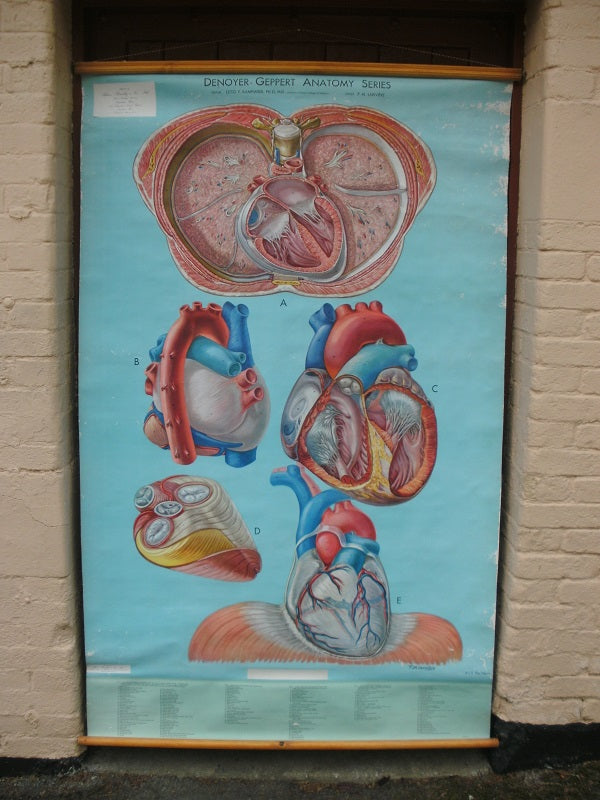 Vintage Denoyer - Geppert / Adam Rouilly extra large medical poster The Heart